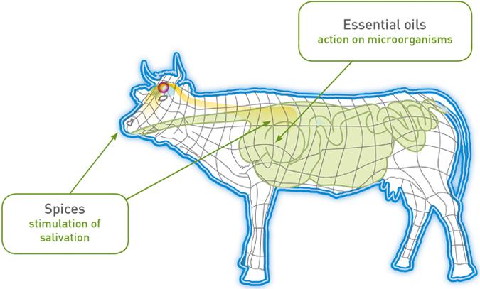 Olfactum Oleobiotec Cow Diagram