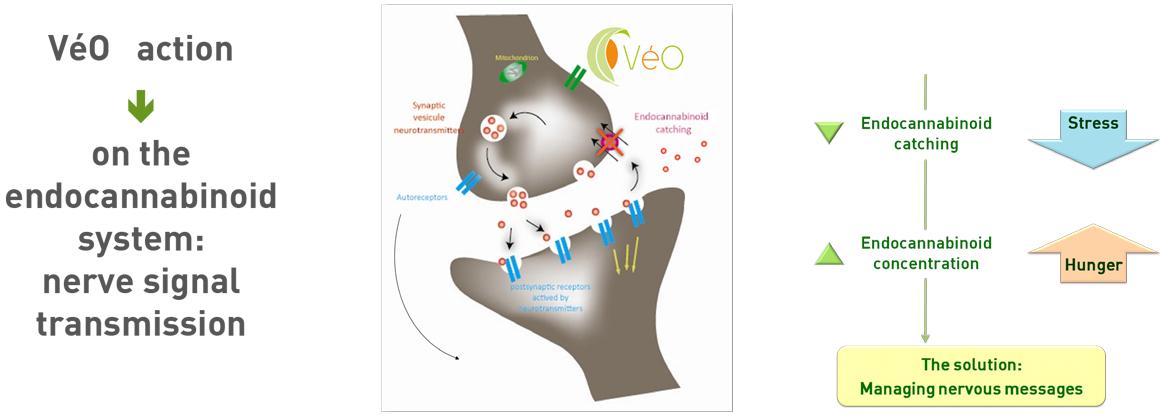 olfactum-veo-pre-diagram-new